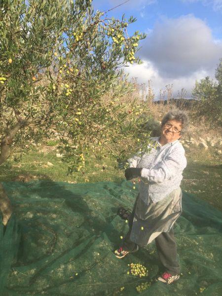 Mamma-Ciancimino-bei-der-Olivenernte-2020